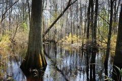 卡罗来纳州南沼泽 免版税库存照片