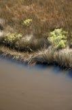 卡罗来纳州沼泽北部盐 免版税库存照片