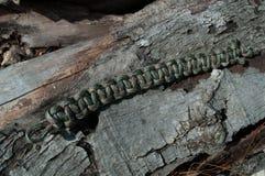 卡莫Paracord镯子反对木头 库存照片