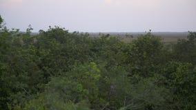 卡萨纳雷沼泽地自然平原,Wisirare,哥伦比亚 影视素材