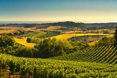 卡萨莱马里蒂莫乡下、葡萄园和风景在Maremma 免版税图库摄影