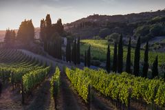 卡萨莱马里蒂莫,托斯卡纳,意大利,从葡萄园的看法9月 免版税库存照片