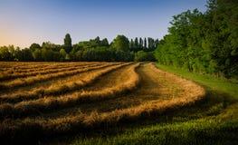 卡萨莱sul sile特雷维索乡下的农田日落的 免版税库存照片