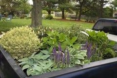 卡车充满植物 免版税库存图片