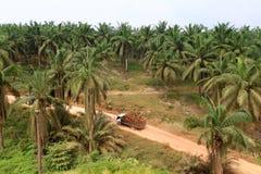 卡车在油棕榈树种植园 库存图片