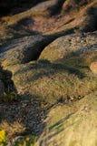 卡迪拉克山细节  免版税库存图片