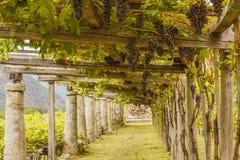 卡雷马,山麓,意大利葡萄园的典型的农业建筑学  免版税库存照片