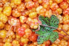 卡累利阿人的野草莓 库存图片