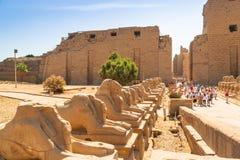 卢克索,埃及卡纳克神庙寺庙  免版税图库摄影
