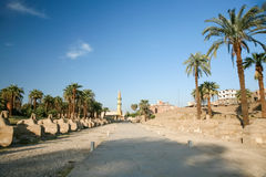 从卢克索的大道向卡纳克神庙 免版税库存照片
