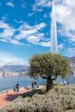 卢加诺,瑞士- 2019年3月10日:喷泉在卢加诺镇,在瑞士的意大利部分的一棵橄榄树 免版税图库摄影