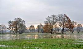 卢布尔雅那沼泽 免版税库存照片