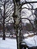 卫兵树在公墓 库存照片