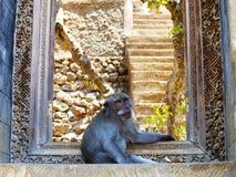 卫兵猴子 免版税库存照片