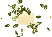 卫矛黄绿叶子在葡萄酒卡片附近安排了  免版税库存照片