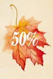 印刷品的汇集美丽的五颜六色的秋叶 免版税库存图片