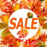 印刷品的汇集美丽的五颜六色的秋叶 库存照片