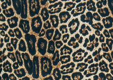 印刷品织品纹理背景镶边了豹子,动物滑雪 免版税库存图片