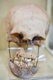 印加人期间的人力头骨 库存图片