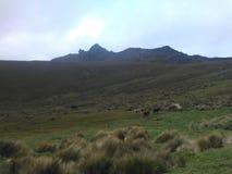 印加人足迹在厄瓜多尔 免版税库存照片