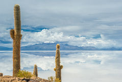 印加瓦西峰海岛,撒拉族de Uyuni,玻利维亚 免版税库存图片