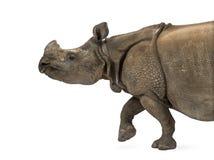 印地安一有角的犀牛 库存图片
