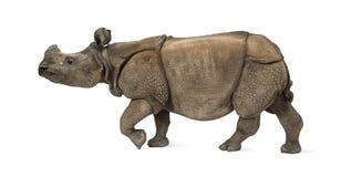 印地安一有角的犀牛 免版税库存照片