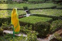 印地安妇女在绿色庭院里工作 图库摄影