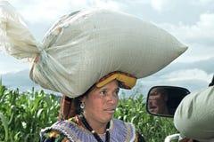 印地安妇女运载在头的鸡食物 免版税图库摄影