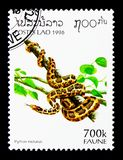印地安岩石Python (Python molurus),动物区系serie,大约1996年 免版税图库摄影