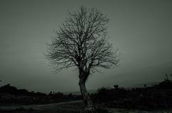 印地安树 免版税库存图片
