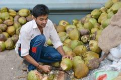 印地安椰子 库存图片