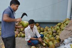 印地安椰子 免版税库存照片