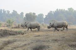印地安犀牛在巴哈瓦尔布尔国家公园巴基斯坦 免版税库存图片