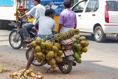 印地安男孩运载捆绑在摩托车的椰子 免版税图库摄影