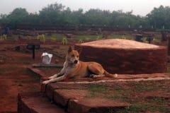 印地安街道狗 库存照片