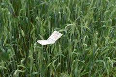 印地安金钱在豪华的绿色麦子农场,繁荣的标志 免版税库存图片