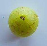 印地安鹅莓 免版税库存图片
