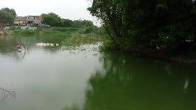 印地安鹳在池塘 库存照片