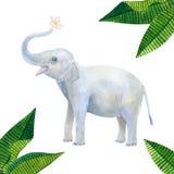 印度可爱宝贝大象拿着一束白花:赤素馨花或羽毛和绿色热带叶子 手拉的水彩 向量例证