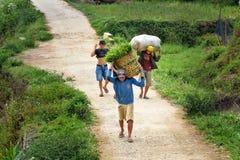 印度尼西亚人运载篮子和袋子在路的草在塔娜Toraja 免版税库存图片