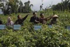 印度尼西亚农业出口 免版税图库摄影