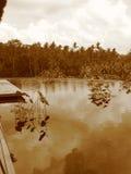 印度尼西亚密林 免版税图库摄影