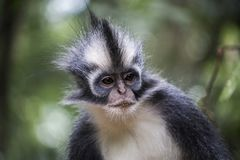 印度尼西亚雨林 免版税库存照片