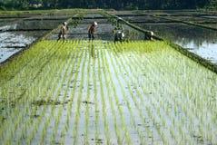 印度尼西亚经济更改结构好处 免版税库存照片