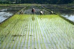 印度尼西亚经济更改结构好处 库存图片