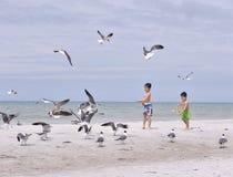 印度岩石海滩3月2019年,佛罗里达-坦帕地区海滩的原始岸的三个孩子哺养 库存图片