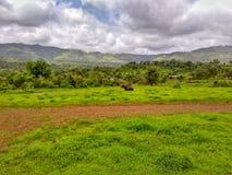 印度新鲜的绿草和山的本质 免版税图库摄影