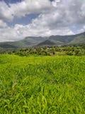 印度新鲜的绿草和山的本质 库存图片