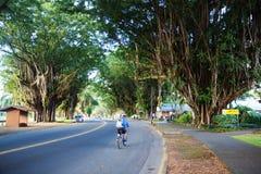 印度榕树驱动 库存照片